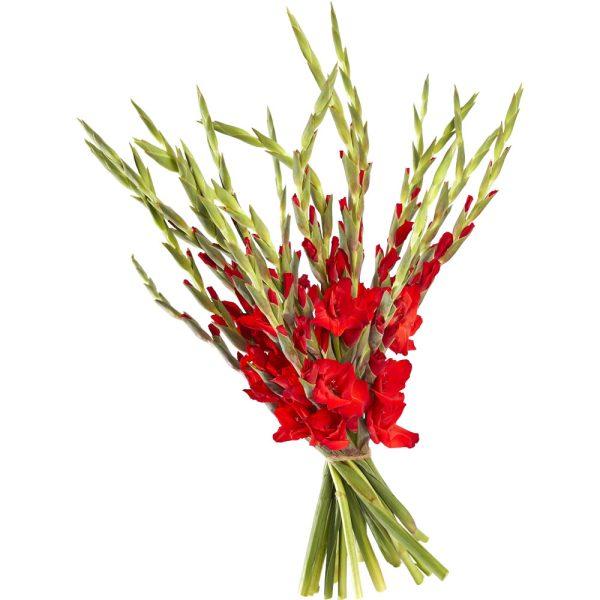 Bouquet gladioli, gladiolus
