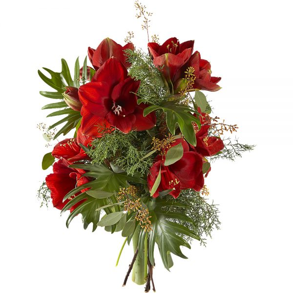 Bouquet of Amaryllis - Hippeastrum