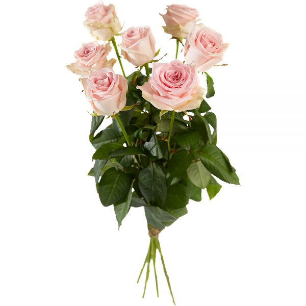 Bouquet of long stemmed pink roses