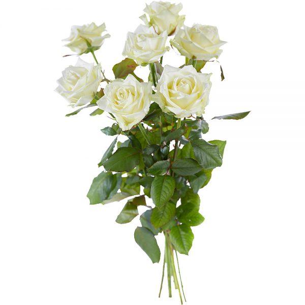 Bouquet of long stemmed white roses