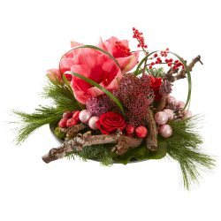 Christmas arrangement with Amaryllis