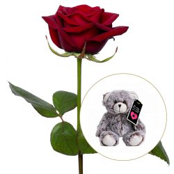 Red rose with a hug and a teddy bear